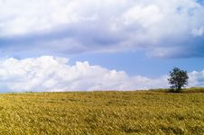 Free Grass Landscape Royalty Free Stock Photography - 7898577