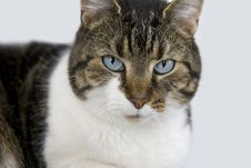 Free Portrait Of A Cat Stock Images - 7898654