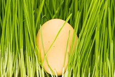 Free Chicken Eggs, Grass Royalty Free Stock Photography - 7899117