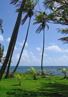 Free Grass Tropical Beach Stock Photo - 7899590