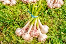 Free One Bundle Of Garlic Lying On The Grass Stock Images - 78934974