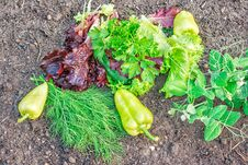 Free Vegetables Lying On The Ground Royalty Free Stock Images - 78934999