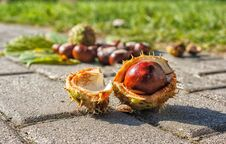 Free Chestnuts On The Pavement Royalty Free Stock Photo - 78935025
