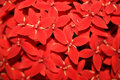 Free LITTLE RED FLOWERS Stock Image - 791731