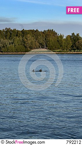 Free Swan River Dolphins Stock Photography - 792212