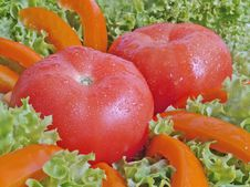 Free Tomato In Salad Royalty Free Stock Photography - 790387
