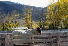 Free Horse And Blanket, Alone In A Pen Stock Images - 791364