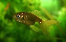 Free Gold Fish In An Aquarium Stock Images - 791444