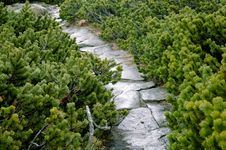 Free Path Between Conifers Stock Photos - 792263
