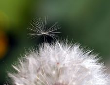 Free Little Seed Trying To Break Free. Stock Photos - 792583