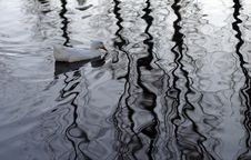 Free White Duck Swimming Stock Photography - 793432
