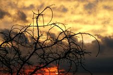 Free Tree And Sunset Stock Photography - 793472