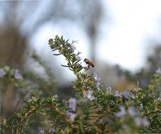 Free Little Bee Stock Photos - 793473