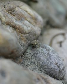 Free Lizard In Rocks Stock Photo - 793680