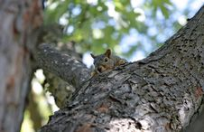 Free Squirrel Royalty Free Stock Photo - 793805