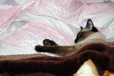 Free Sleeping Cat Stock Photo - 795470