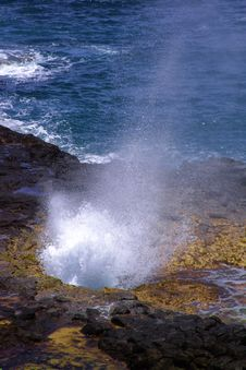 Free Spouting Horn And Rainbow Royalty Free Stock Photo - 796345