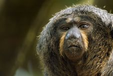 Free Monkey Closeup Stock Photo - 796910