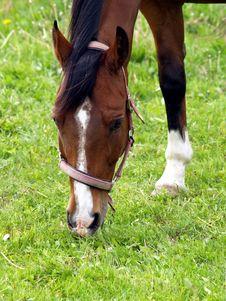 Free Horse Stock Photo - 799470