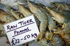 Free Raw Tiger Prawns Royalty Free Stock Photos - 7902678