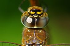 Free Close Up Of A Dragonfly Royalty Free Stock Photography - 7903237