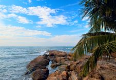Free Stones On The Sea And Palm Tree Royalty Free Stock Photography - 7903257