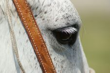 Free Horse Eye Close Up Royalty Free Stock Photography - 7905137