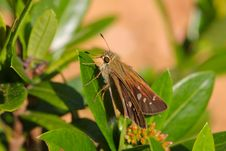 Free Moth Stock Images - 7905264