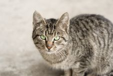 Free Cat Sitting And Watching Royalty Free Stock Photo - 7905585