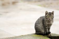 Free Beautiful Cat Sitting And Watching Royalty Free Stock Image - 7905736