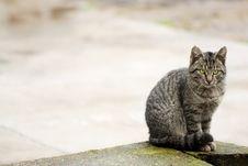 Free Beautiful Cat Sitting And Watching Royalty Free Stock Image - 7905736