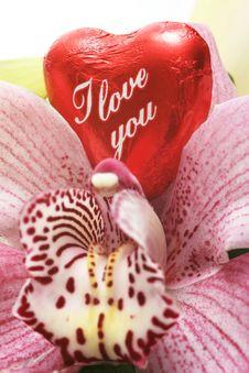 Free Valentine Stock Photo - 7906590
