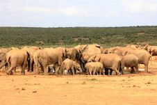 Free Elephant Herd At Waterhole Royalty Free Stock Images - 7907089