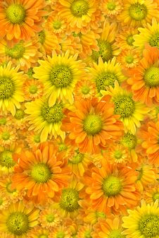 Free Yellow Flowers Background Stock Photos - 7907113