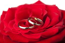 Free Golden Wedding Rings Over Red Rose Isolated Royalty Free Stock Image - 7907206