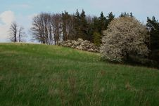 Free View On Meadow With Tree In Blossom Royalty Free Stock Photography - 7907337