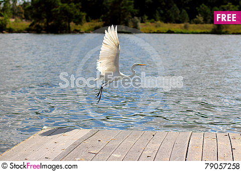 Free Great Egret Flying Royalty Free Stock Photos - 79057258