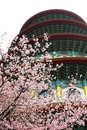 Free Cherry Blossoms Stock Photos - 7912363