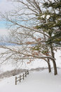 Free Winter Landscape Royalty Free Stock Photography - 7913787
