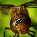 Free Dragon-fly Stock Photo - 7917260