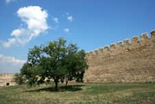 Free Tree Growing Near To A Stone Wall Stock Image - 7910781