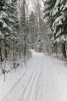 Free Ski Track In Wood Stock Image - 7910791