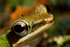Free Forest Frog Macro Stock Photos - 7911193