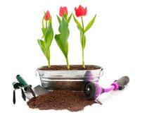 Free Spring Prep Stock Photos - 7911923