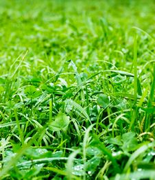 Free Green Grass Stock Image - 7912911