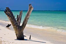 Free Caribe Royalty Free Stock Image - 7913836