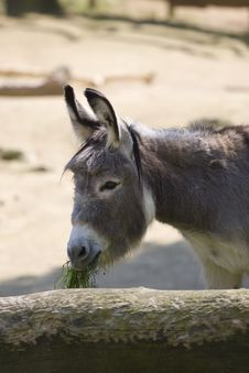 Free Eating Donkey Stock Photos - 7913873
