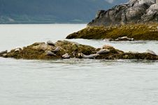 Free Seals In Alaska Stock Photography - 7914752