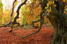 Free Autumn Tree Stock Images - 7914994