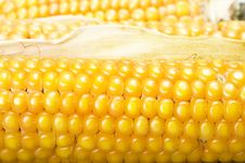 Free Corn Close Up Royalty Free Stock Photography - 7915437